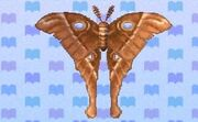 Oak silk moth encyclopedia (New Leaf)