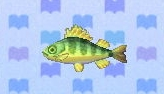 Yellow perch encyclopedia (New Leaf)