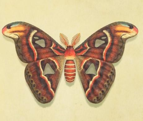 Atlas Moth Animal Crossing Wiki Fandom