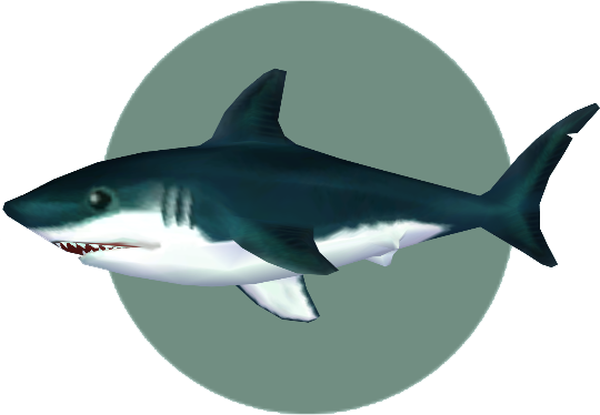 Shark animal crossing wiki fandom powered by wikia these have rows of teeth that can be replaced indefinably lucky shark altavistaventures Images