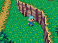 Animal Crossing wikia Pictures