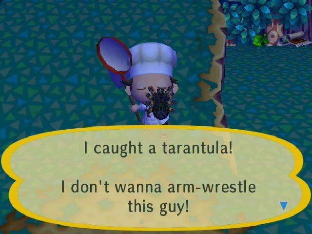 File:I caught a trantula!.jpg