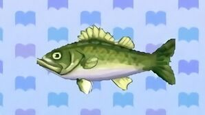 Sea bass encyclopedia (New Leaf)