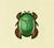 Escarabajo nadador NH