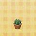 Round-mini-cactus