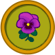 Violeta purpura