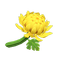 Crisantemo amarillo (New Horizons)