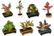 Bonsai Set