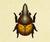 Escarabajo astado hércules NH