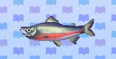 Salmon encyclopedia (New Leaf)