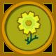 Cosmos amarillo