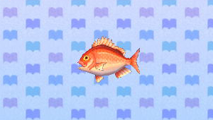 File:RedSnapperNL.png