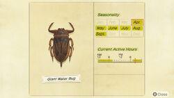 NH-encyclopedia-Giant water bug