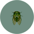 Robust Cicada (City Folk)