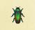 Escarabajo joya NH