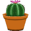 File:Roundcactuscf.png