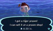 HNI 0080 tiger prawn