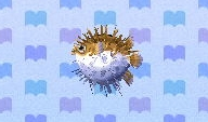Puffer fish encyclopedia (New Leaf)