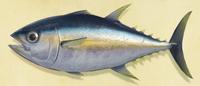 NH-Tuna