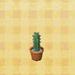 Tall-mini-cactus