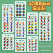 Made a Flower Breeding Info-Graphic with Data Mined data! 100% Accurate!!