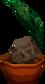 Coconutpalmgc