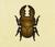 Escarabajo ciervo Miyama NH