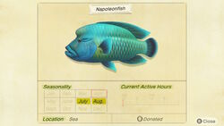 Napoleon Fish Encyclopedia (NH)