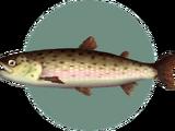 Stringfish