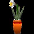 Daffodilcf.png