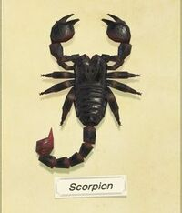 ScorpionNH