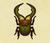 Escarabajo ciervo cyclommatus NH