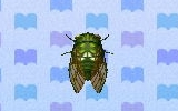 Robust cicada encyclopedia (New Leaf)