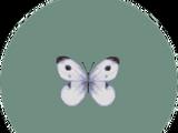 Bugs (City Folk)