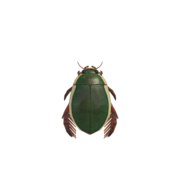 NH-diving beetle