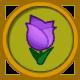Tulipan purpura
