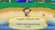 Butterflyfishcf
