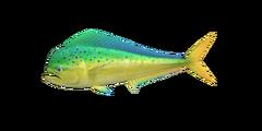 NH-fish-Mahimahi