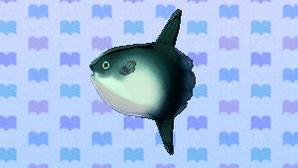 OceanSunfishNL