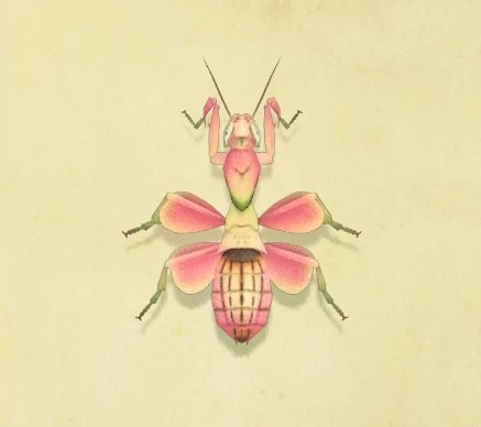 Orchid Mantis Animal Crossing Wiki Fandom