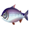PC-FishIcon-King salmon