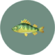 Yellow Perch (City Folk)