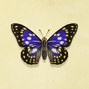 動森-大紫蛺蝶