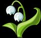 Flor de Nieve (2)
