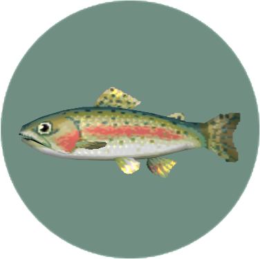 Rainbow Trout (City Folk)