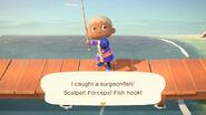 Surgeonfish catch NH