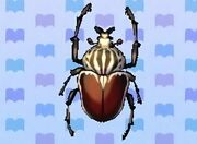 Goliath beetle encyclopedia (New Leaf)