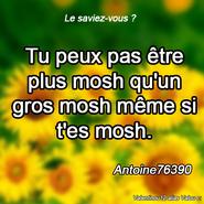 Lesaviezvous Antoine 3