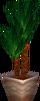 Cornplantgc