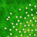Flooring daisy meadow